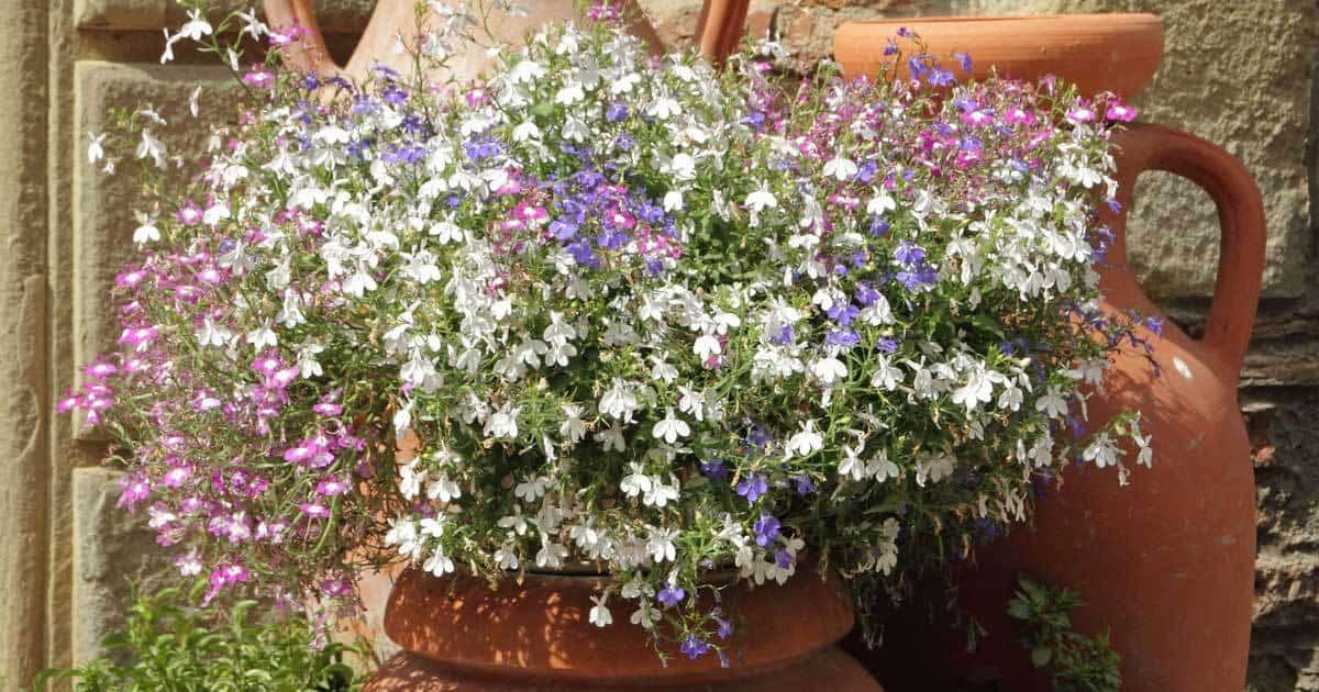 terra-cotta-pots-color-patio-08312015