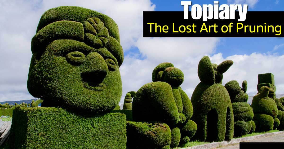 Topiary Trees The Lost Art Of Pruning