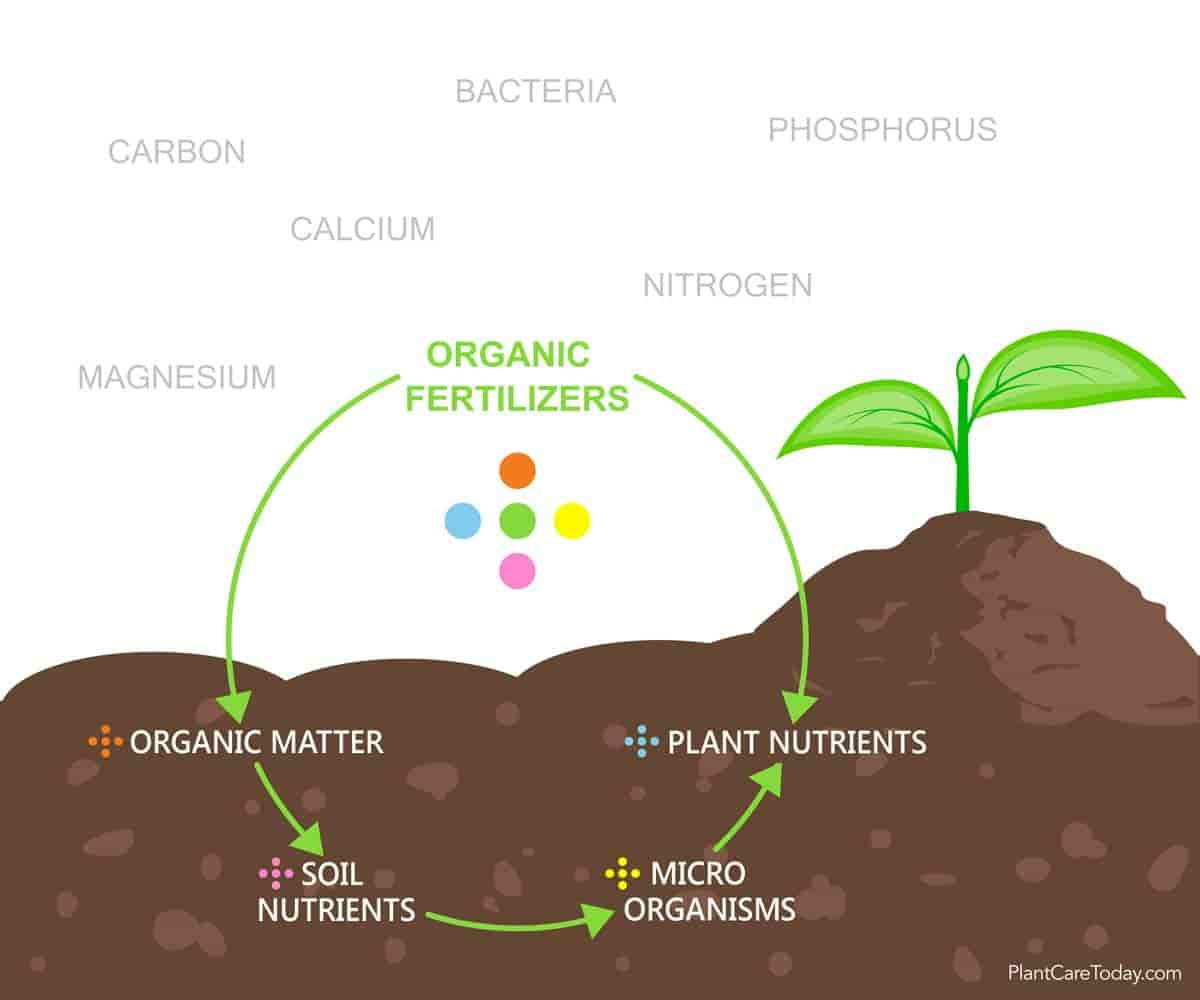 graphic of organic soil and trace elements