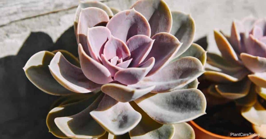 Tips on Transplanting Succulents