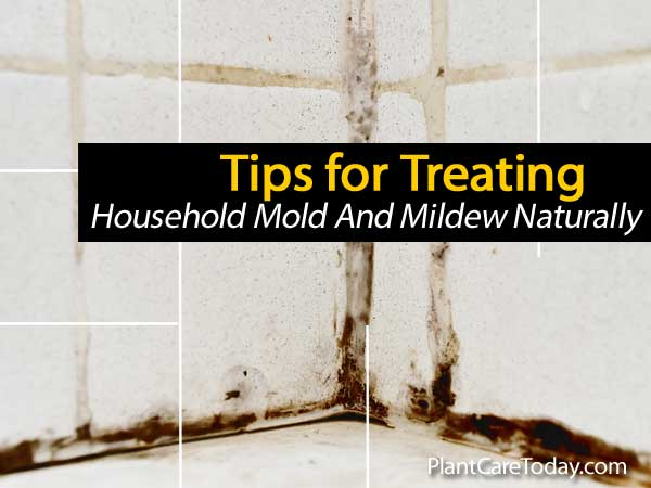Tips For Treating Household Mold And Mildew Naturally