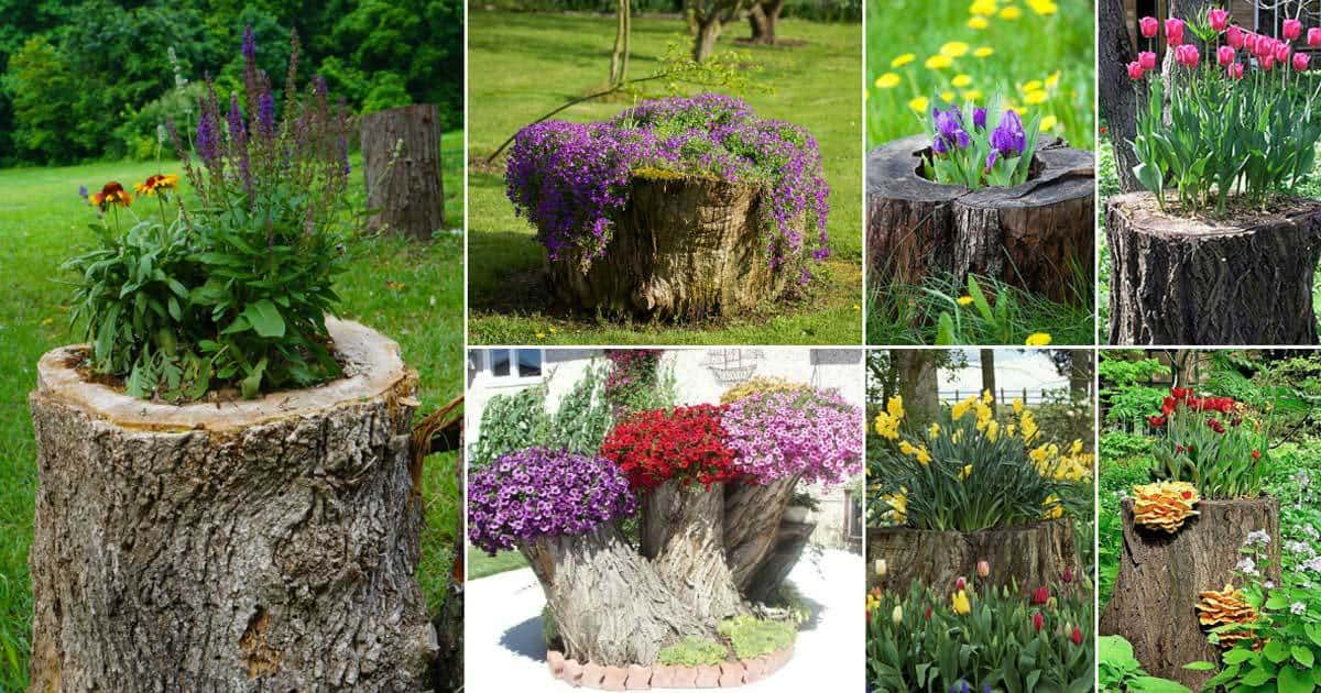 Exceptionnel 12+ Old Tree Stumps Transformed Into Beautiful Flower Planters