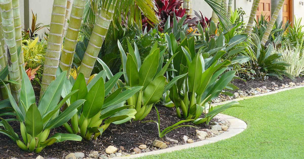 Tropical landscaping design create your own getaway for Tropical landscape