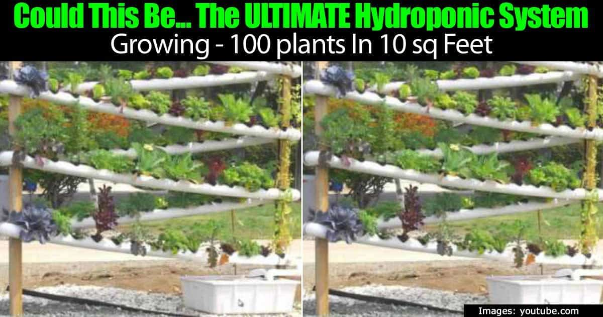 Could This Be The Ultimate Hydroponic System Growing