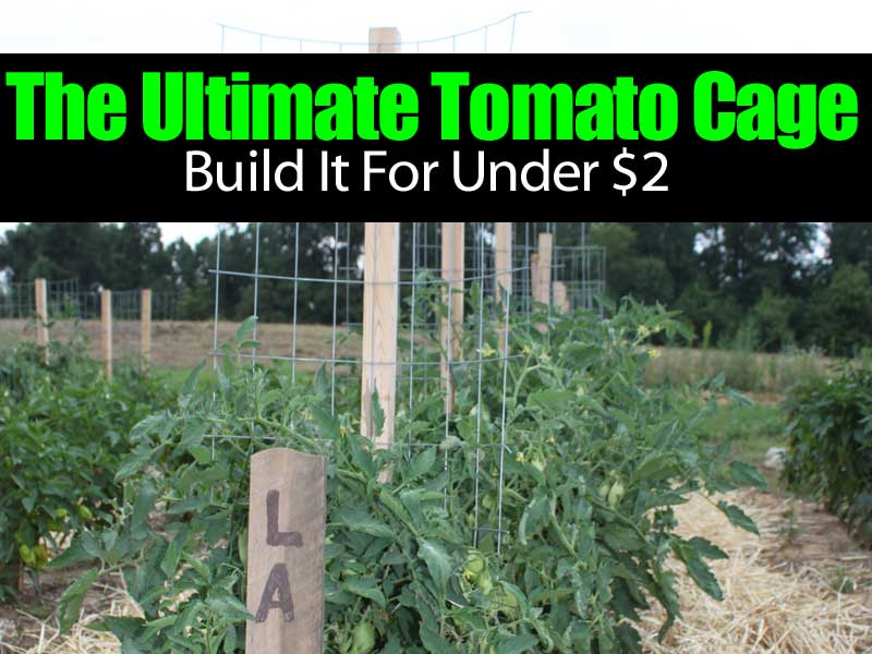 The Ultimate Tomato Cage Build It For Under 2