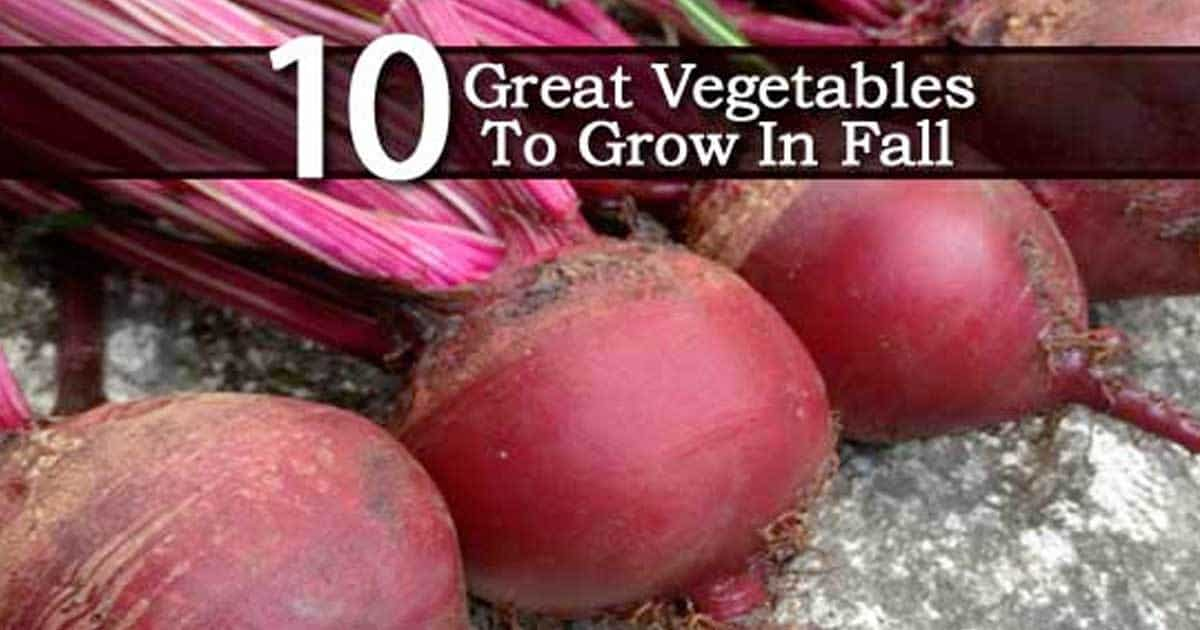 vegetables-grow-fall-08312016