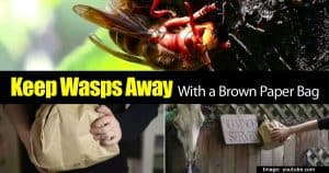 keeping wasps away with a brown bag