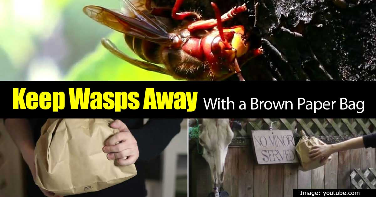 wasps-in-a-bag-43020151439