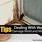 10 Tips For Tackling Mold, Mildew & Water Damage