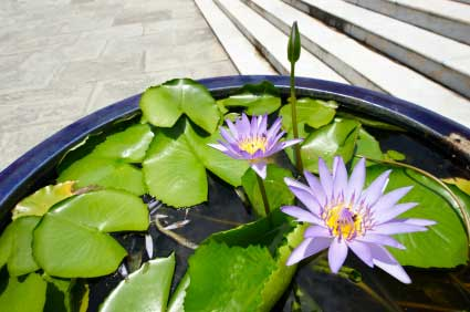 water-lily-tub