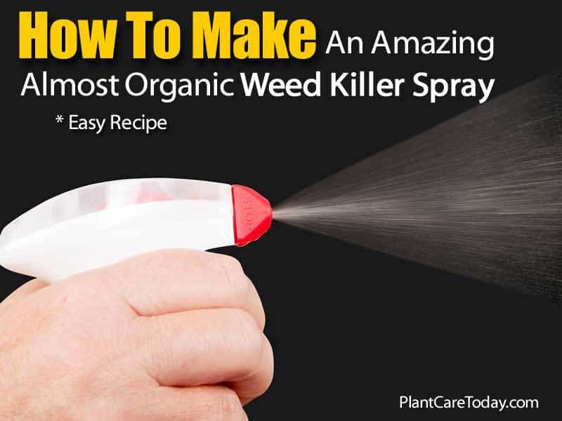 Almost Organic Weed Killer Spray Recipe