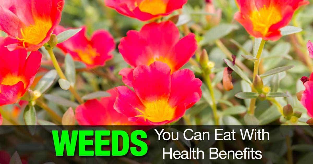 weeds-eat-health-benefits-03312016