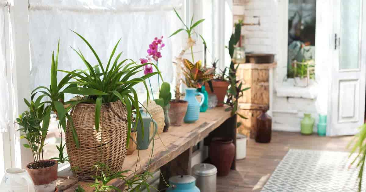 east facing window plants a wide array