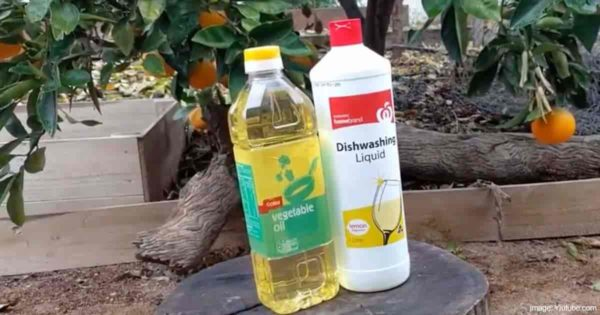 vegetable oil and dishwashing liiquid components to make white insecticide oil