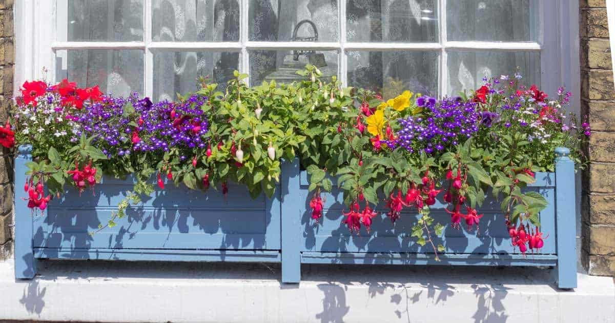 Why When And How To Use Flower And Window Box Liners Or Inserts