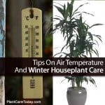 Tips On Air Temperature And Winter Houseplant Care