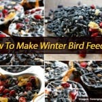 Make Winter Bird Feeders Your Feathered Friends Will Crave More Than A Cinnabon