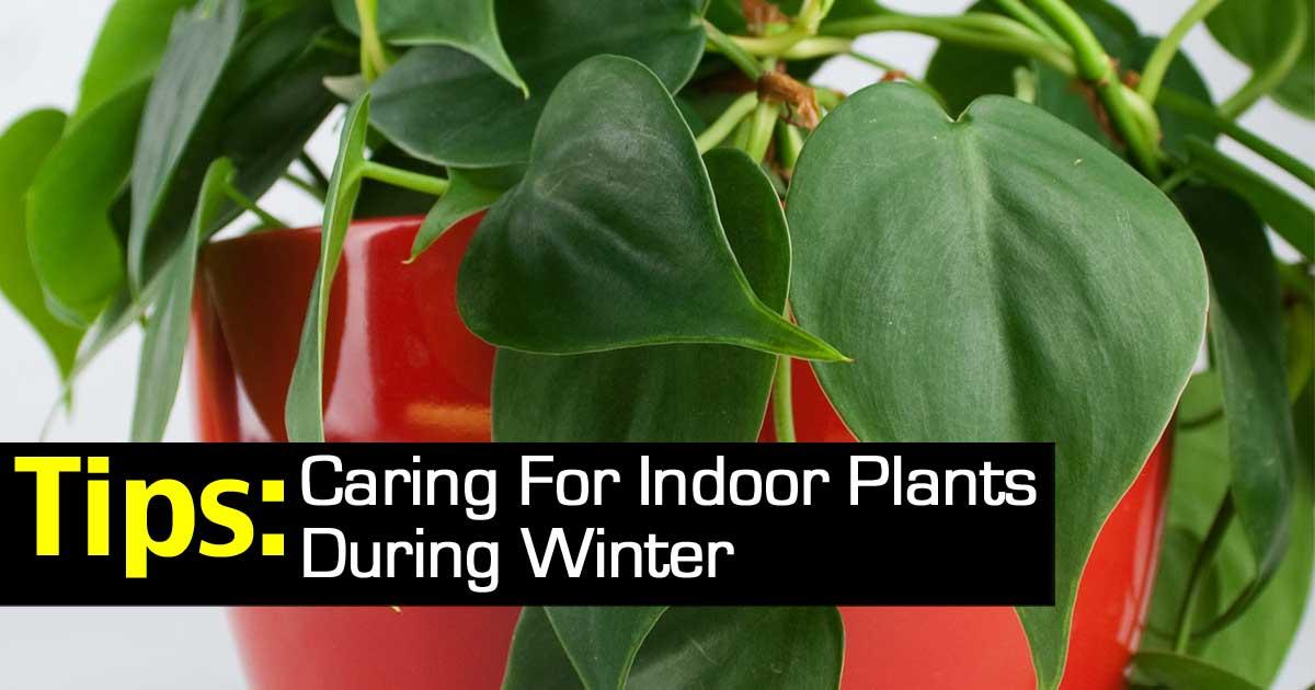 winter-houseplant-care-103114