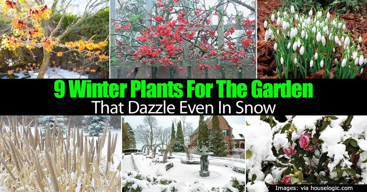 Superbe Winter Garden Plants