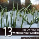 13 Tips On How To Winterize Your Garden