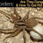 Wolf Spiders: Are They Dangerous and How To Get Rid Of Them