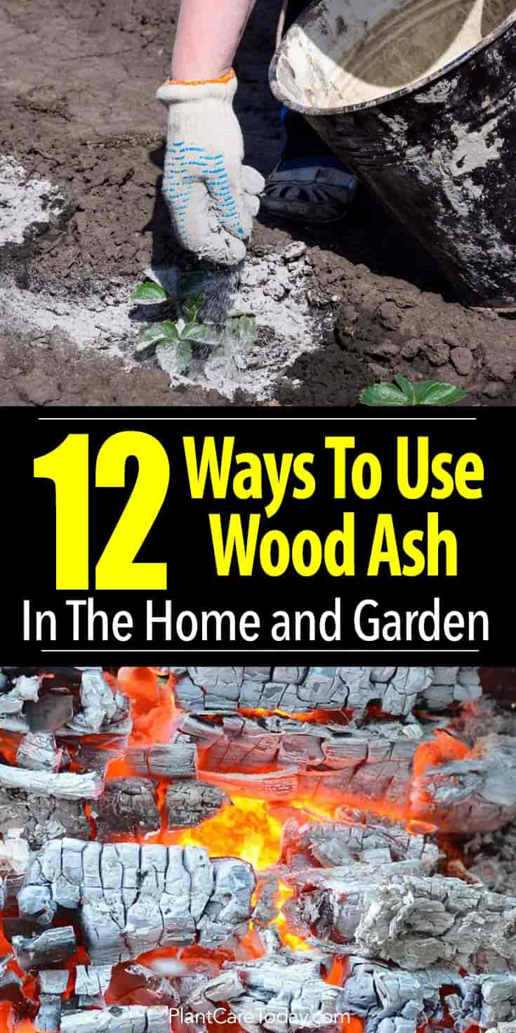 Astonishing 12 Ways To Use Wood Ash In The Home And Garden Home Remodeling Inspirations Propsscottssportslandcom