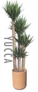yucca-terra-cotta