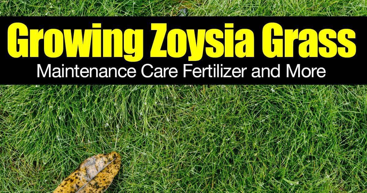 zoysia-grass-01312016