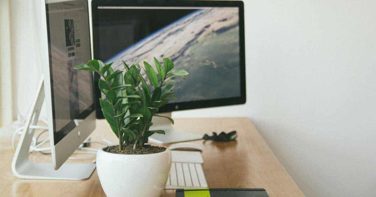 zz plant on desk